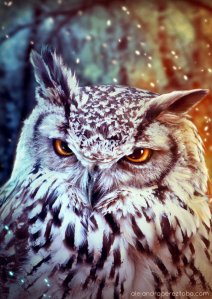 The wise Owl - Photomanipulation
